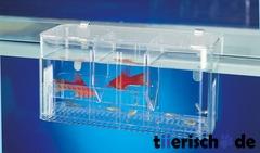 Ablaichkasten Aquarium