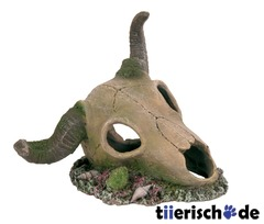 Bffel-Schdel Aquarium Deko