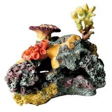 Korallenriff fürs Aquarium