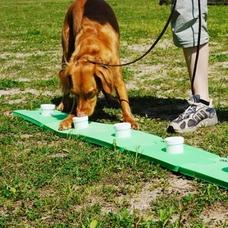 TEAMCANIN Sniffledog