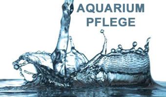 Aquarium Pflege