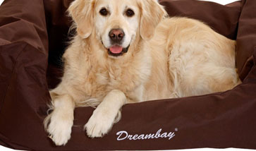 Dreambay Hundebetten