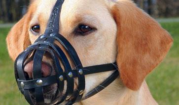 Maulkörbe für Hunde online bestellen