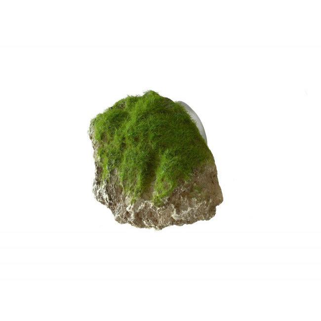 Aqua Della Moss Stone Stein mit Moos Bild 2