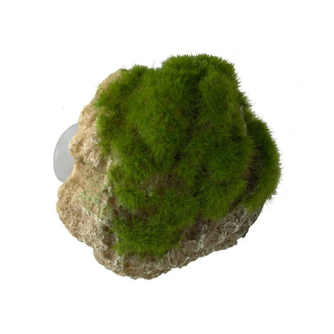 Aqua Della Moss Stone Stein mit Moos Bild 3