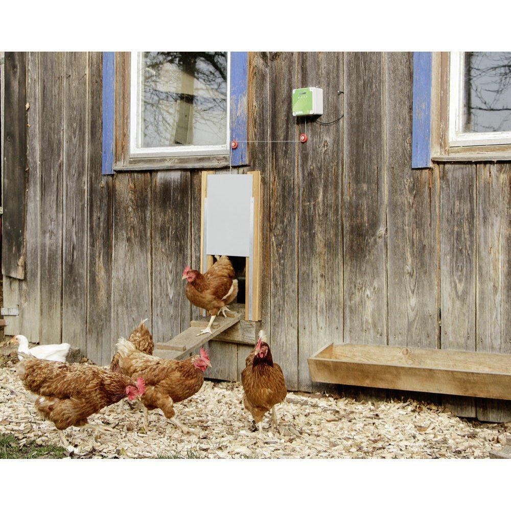 Automatische Hühnertür Komplett-Set inkl. Schiebetür Bild 2