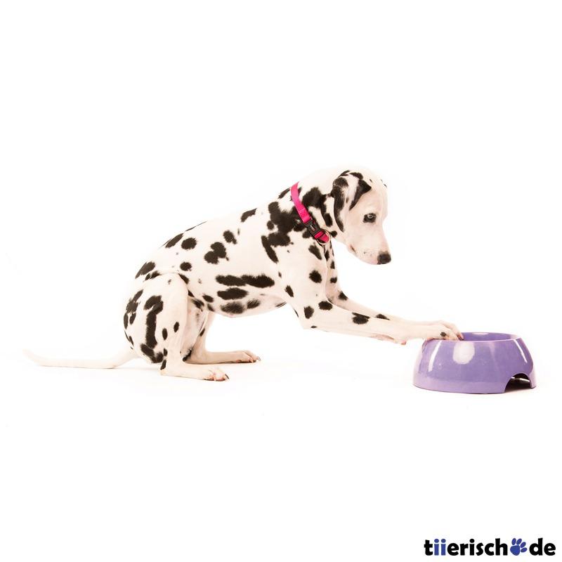 Bio Hundenapf Bongusto aus Bambus Bild 6