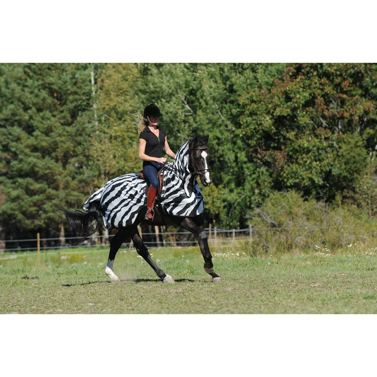 Buzz Off Riding Zebra Ausreitdecke Bild 5