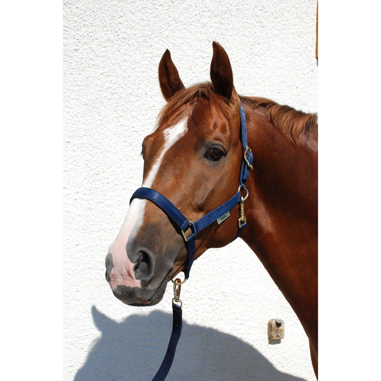 Bucas Pferdehalfter Dublin Bild 2