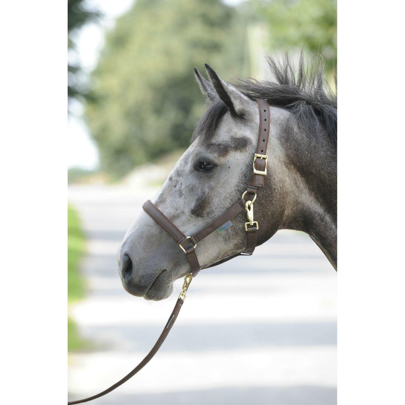Bucas Pferdehalfter Dublin Bild 5