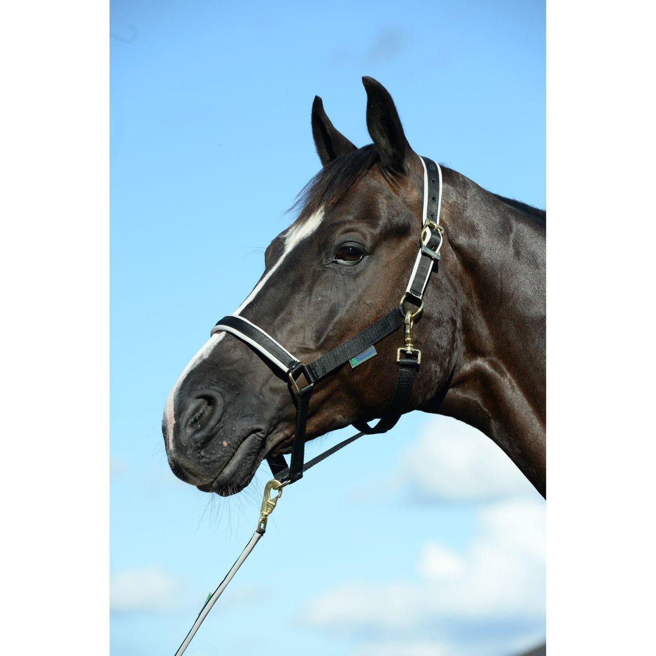 Bucas Pferdehalfter Dublin Bild 7