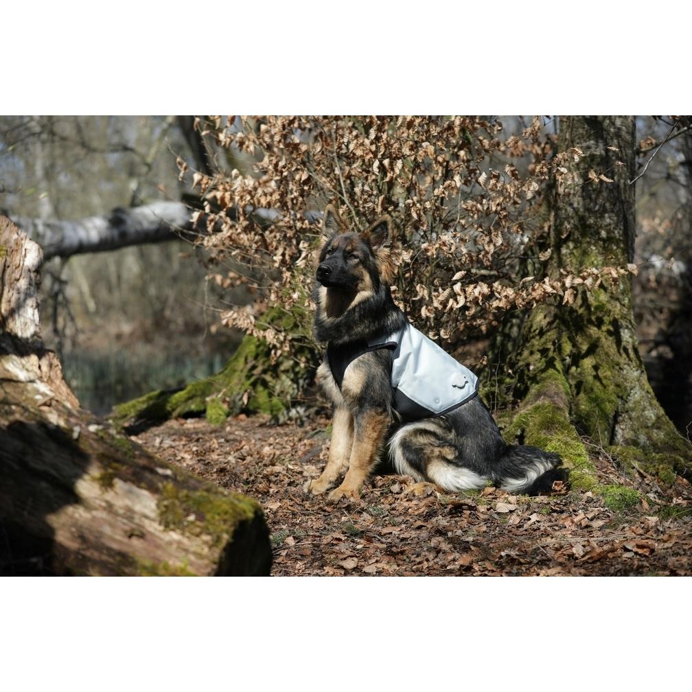 Cani.Cool Kühlweste für Hunde Bild 5