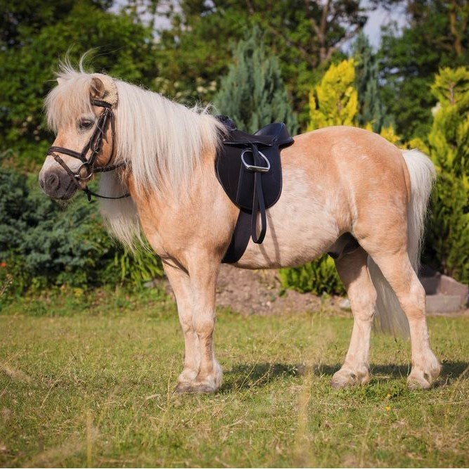 Sattel Set Economy für Pony Bild 2