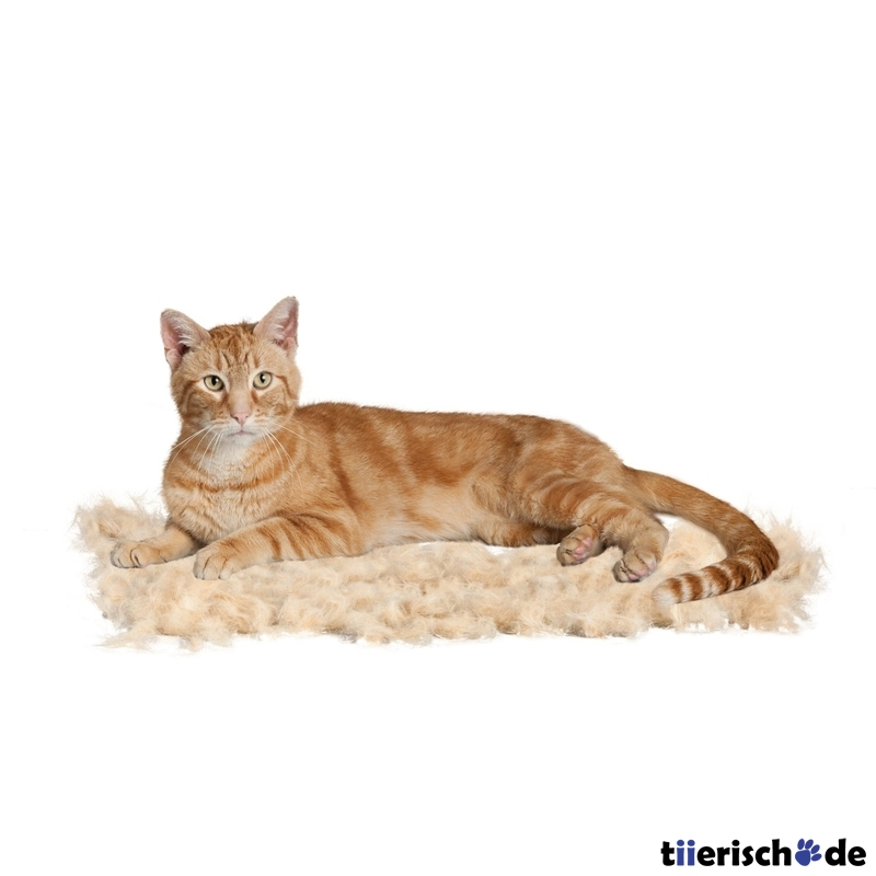 furminator katze kurzhaar von furminator g nstig bestellen bei. Black Bedroom Furniture Sets. Home Design Ideas