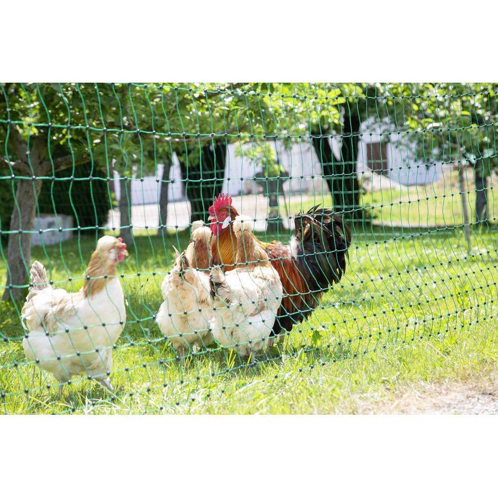 Geflügelnetz PoultryNet grün elektrifizierbar Bild 2