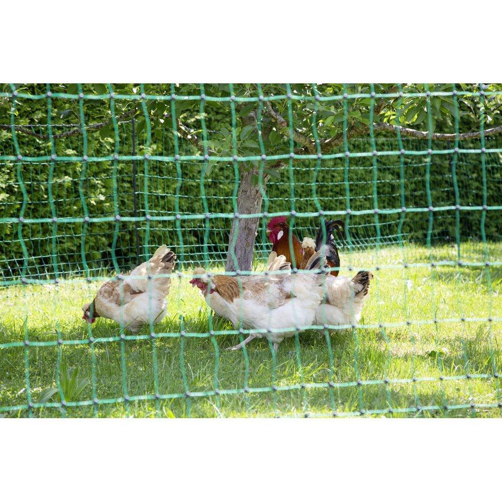 Geflügelnetz PoultryNet grün elektrifizierbar Bild 9