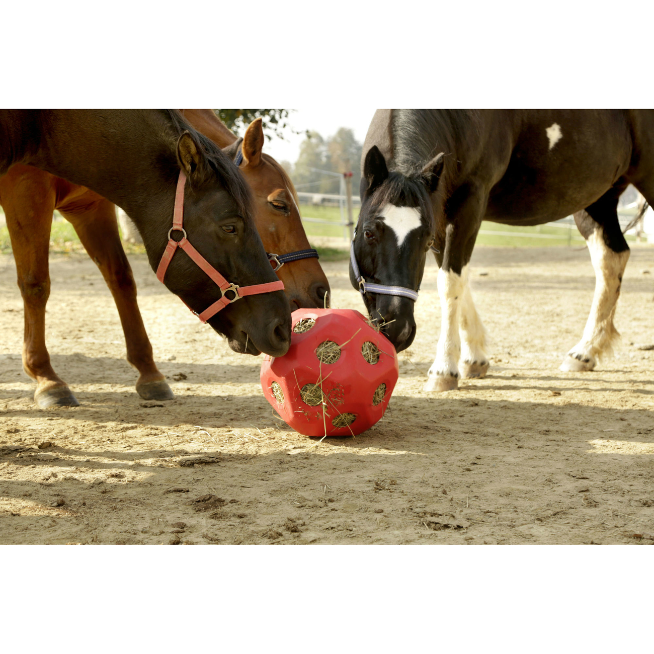 Kerbl HeuBoy Futterspielball für Pferde Bild 2
