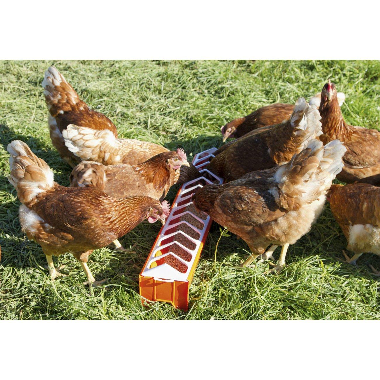 Hühner Futtertrog aus Kunststoff Bild 4