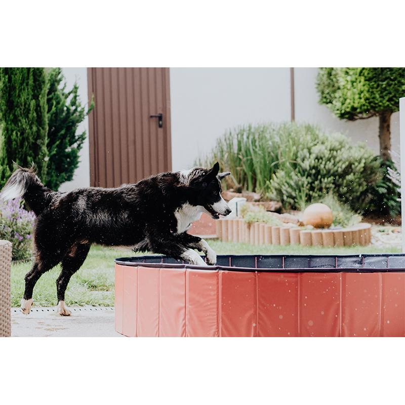 Hundepool Doggypool Bild 3