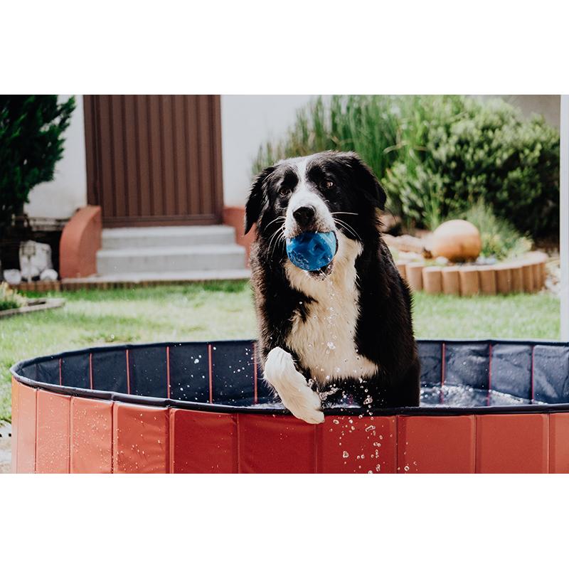 Hundepool Doggypool Bild 4