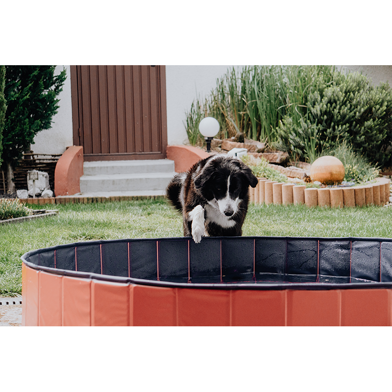 Hundepool Doggypool Bild 2