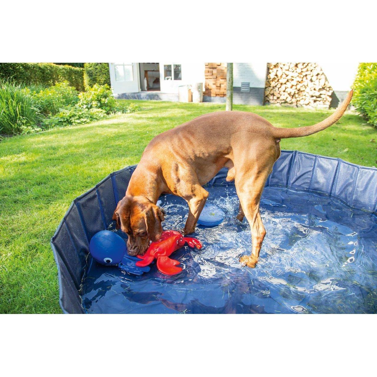 Karlie Doggy Pool Bild 3