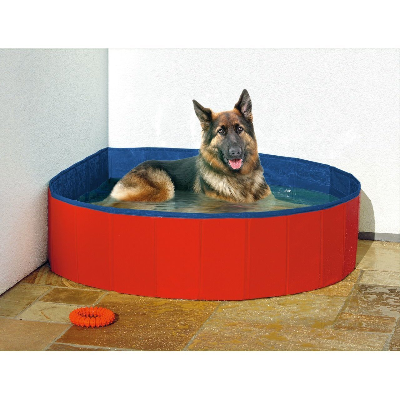 Hundepool Doggypool Bild 6