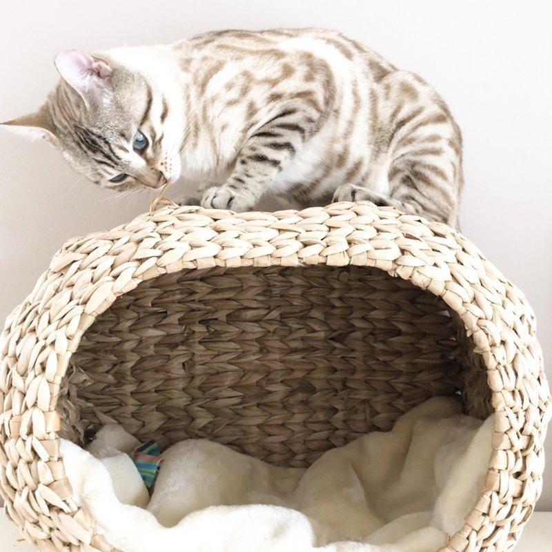 Katzen Heizungskorb Sunrise mit Kissen Bild 3