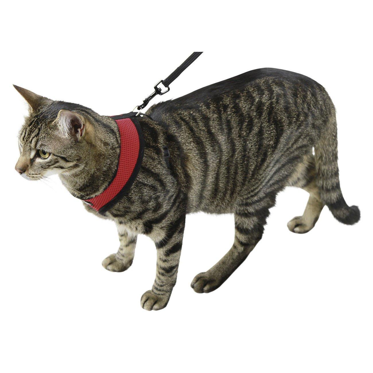 Katzengeschirr Active mit Leine Bild 3