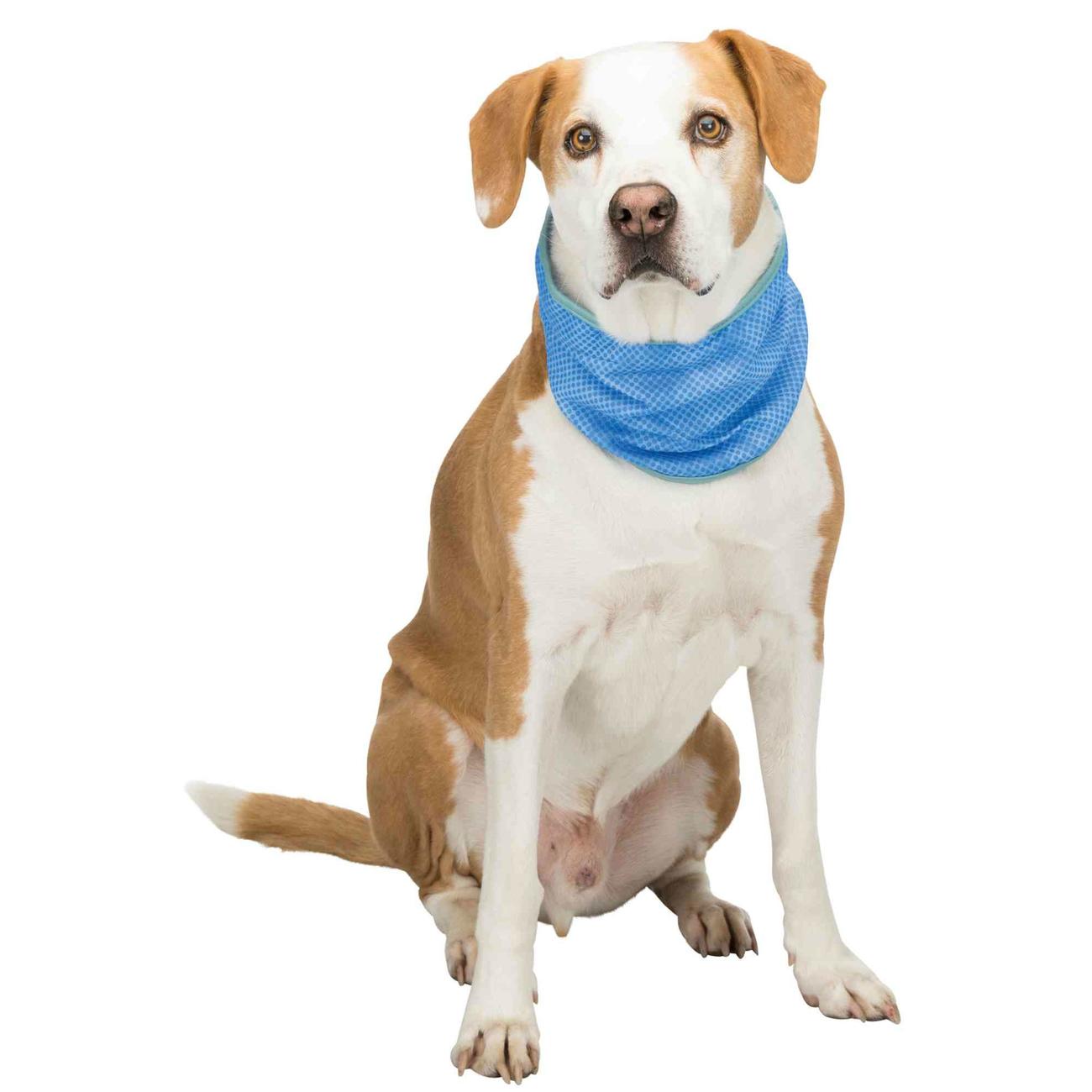 Kühlbandana Kühlhalsband für Hunde Bild 4