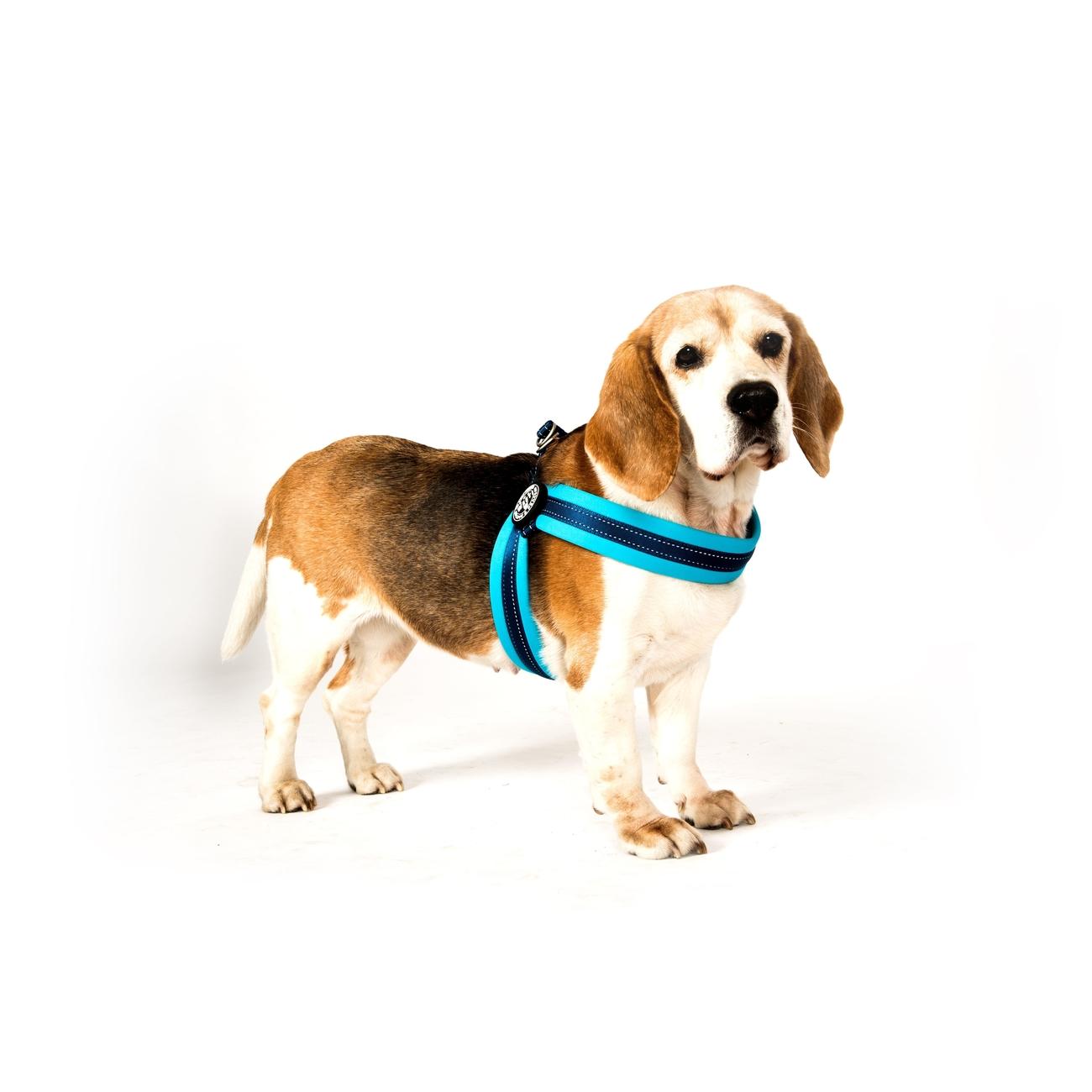 Max & Molly Matrix Q-Fit Geschirr für Hunde Bild 3
