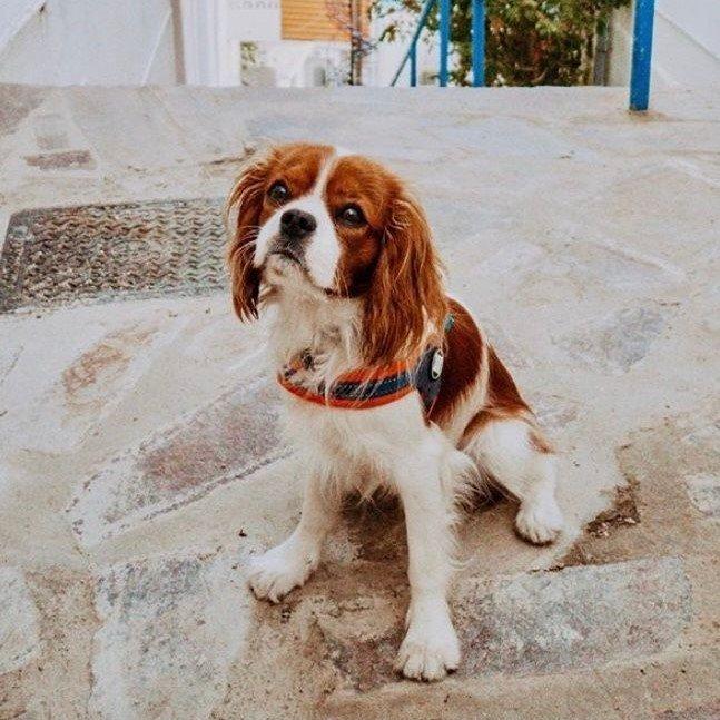 Max & Molly Matrix Q-Fit Geschirr für Hunde Bild 11