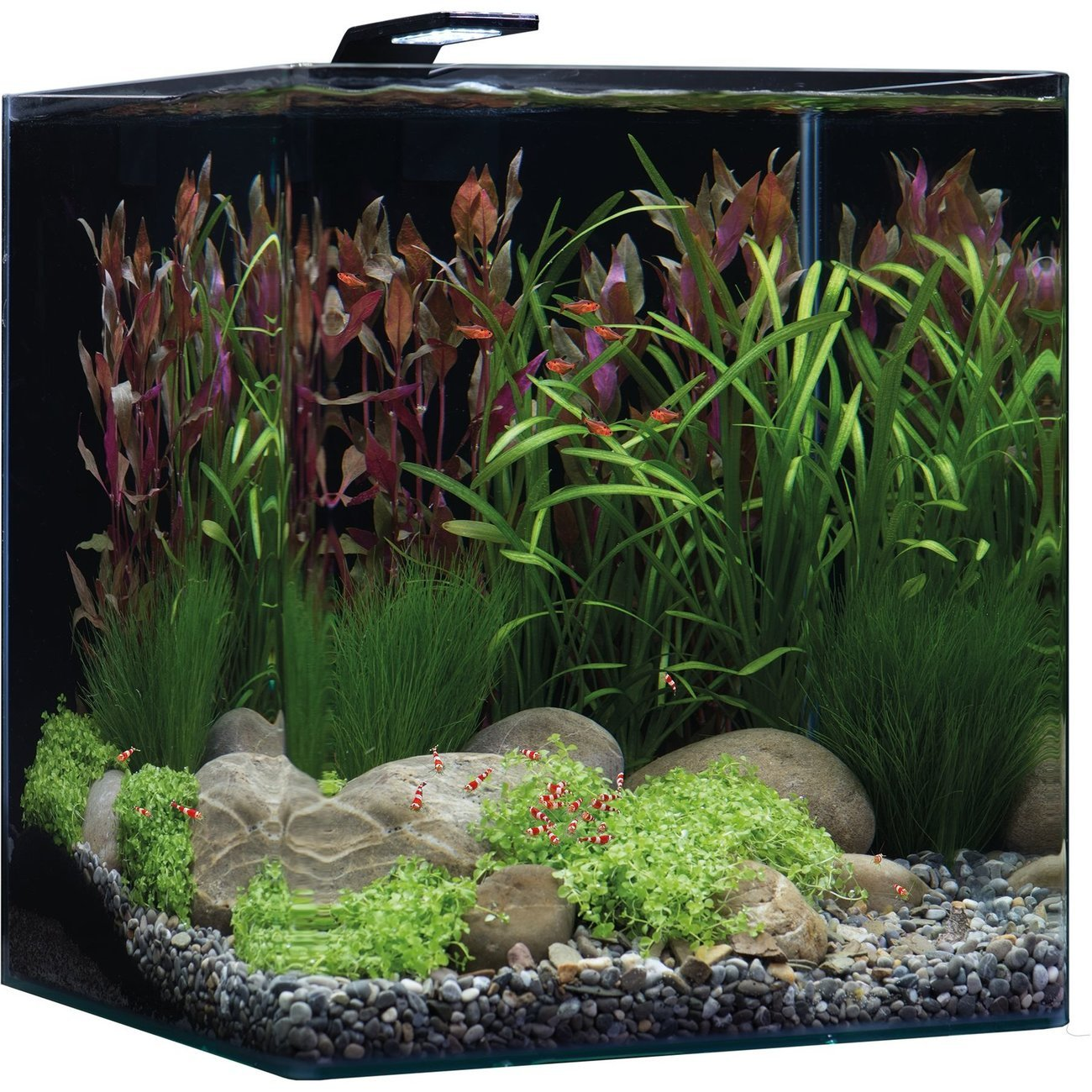 Dennerle NanoCube Basic Style LED Aquarium Bild 8