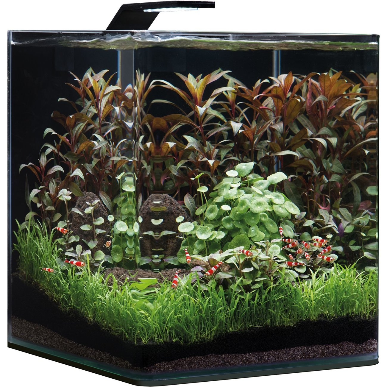 Dennerle NanoCube Basic Style LED Aquarium Bild 6