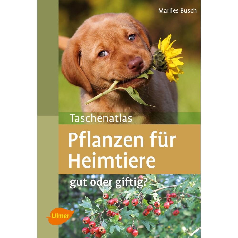 Pflanzen für Heimtiere Bild 1