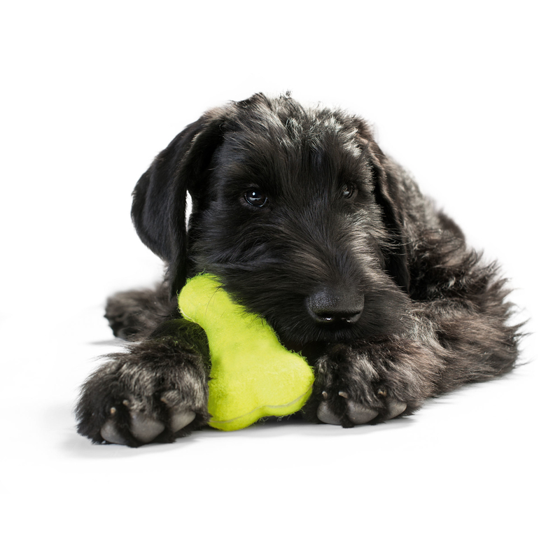 Tennisknochen für hunde von hunter online kaufen bei