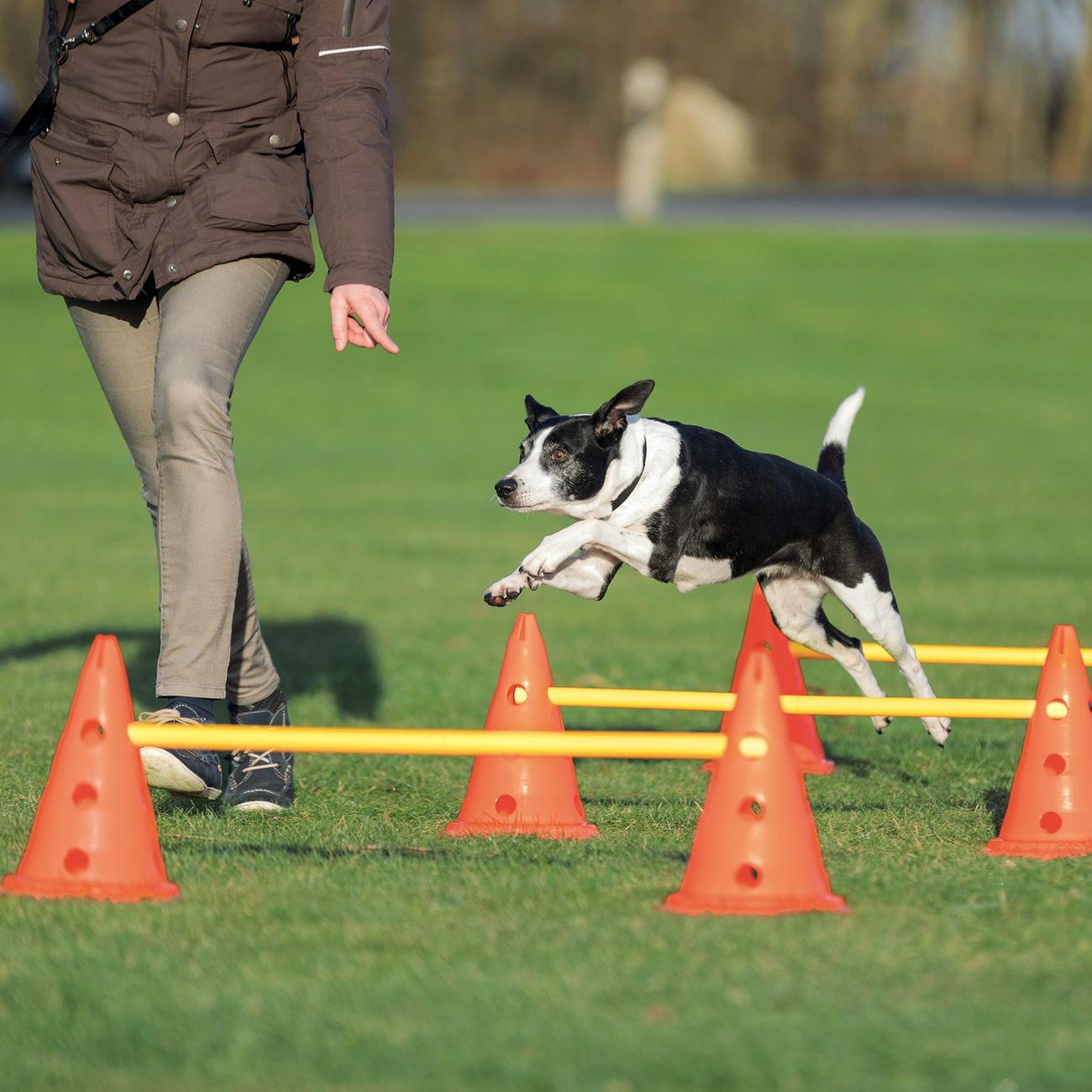 Trixie Dog Activity Agility Hindernisse Pilonen Bild 3