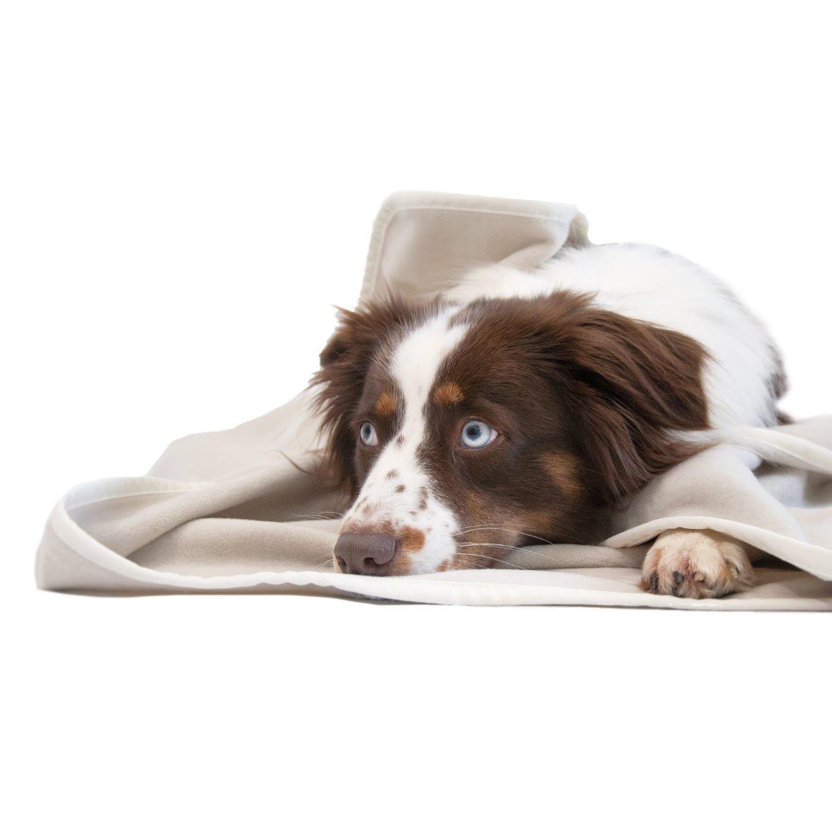 Kuscheldecke für Hunde 95 Grad Bild 2
