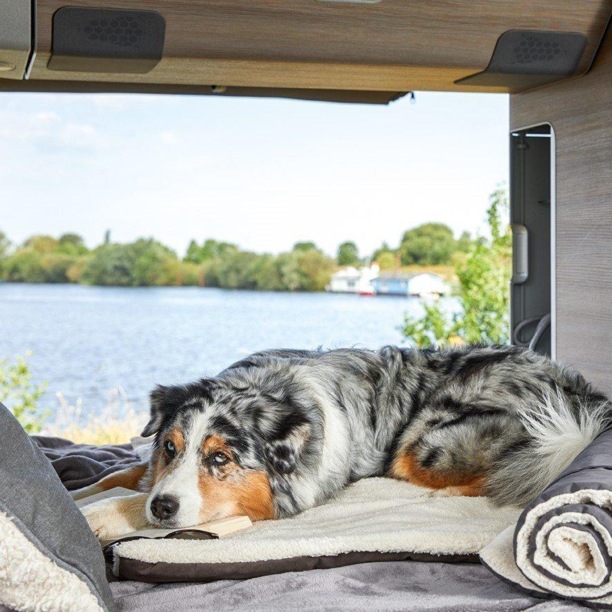 Hunde Reisedecke Vagabund Bild 2