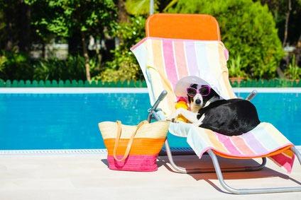 Hunde am Pool