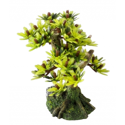 Aqua Della Bonsai Bäume Preview Image