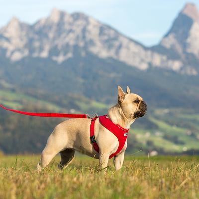 Curli Brustgeschirr Basic Air Mesh für kleine Hunde Preview Image