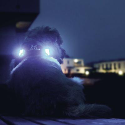 Curli luumi LED Sicherheitslicht Preview Image