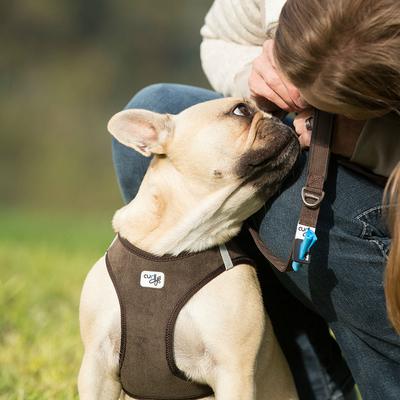 Curli Vest Geschirr Cord für Hunde Preview Image