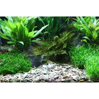 Dennerle Plantahunter-Kies Rio Xingu Preview Image
