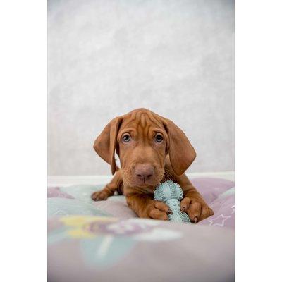 TRIXIE Junior Gummi Hantel für Hunde Preview Image