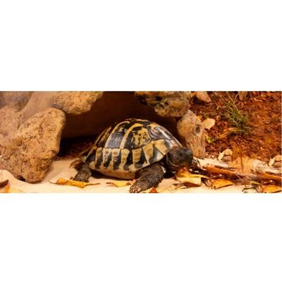Exo Terra -  Landschildkröten Höhle Preview Image