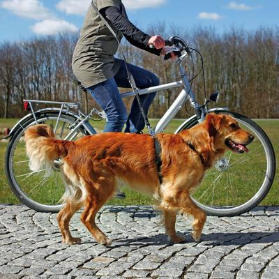 TRIXIE Fahrradleine und Joggingleine für Hunde Preview Image