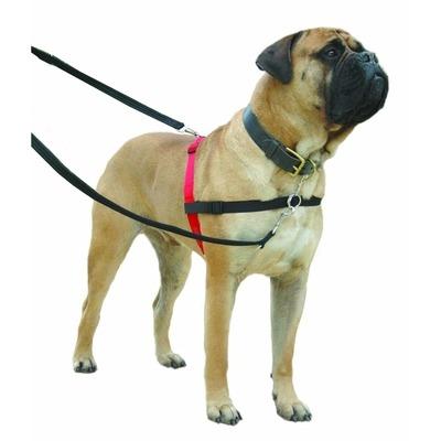Company of Animals HALTI Harness Ausbildungsgeschirr für Hunde Preview Image