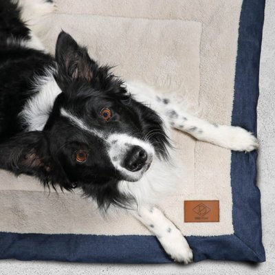 DREAM and DARE Hundedecke Davy aus Kanevas Preview Image